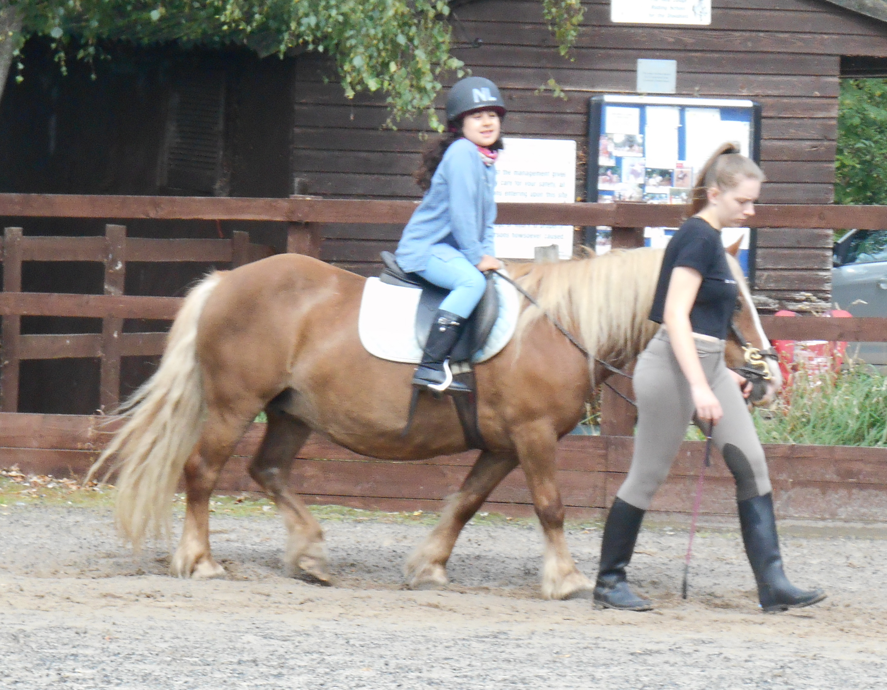 Free Horse Riding At New Lodge Centre New Lodge